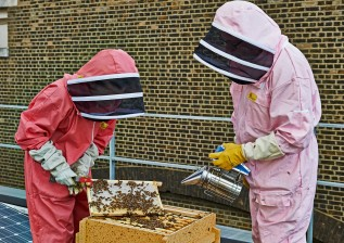Our museum bees